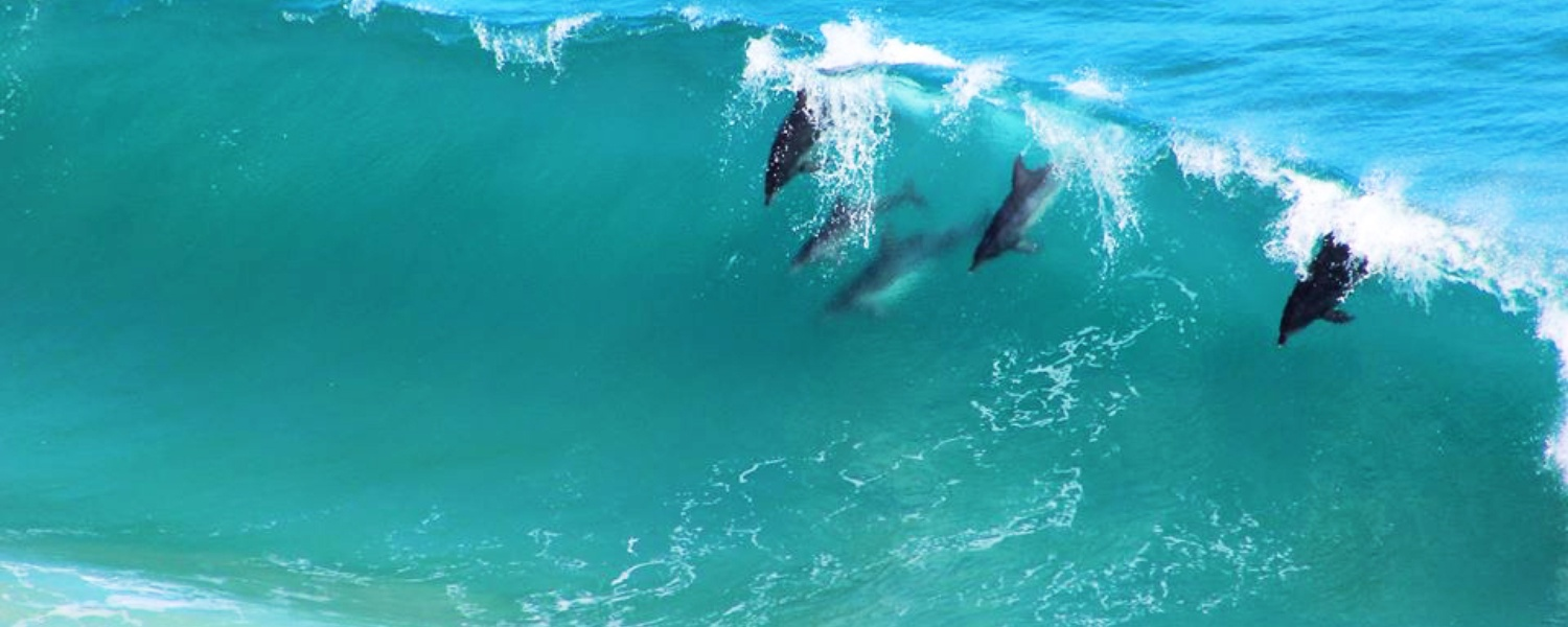 beach accommodation sea views dolphines swimming southern cape