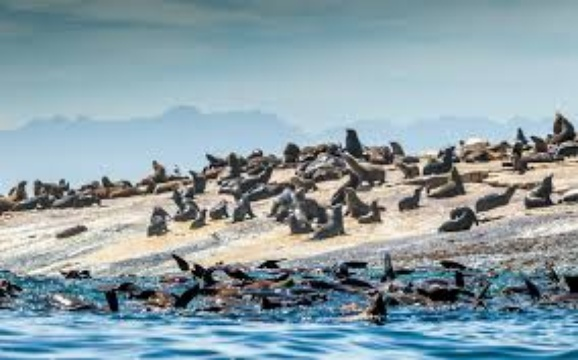 Seal island activities in Mossel Bay