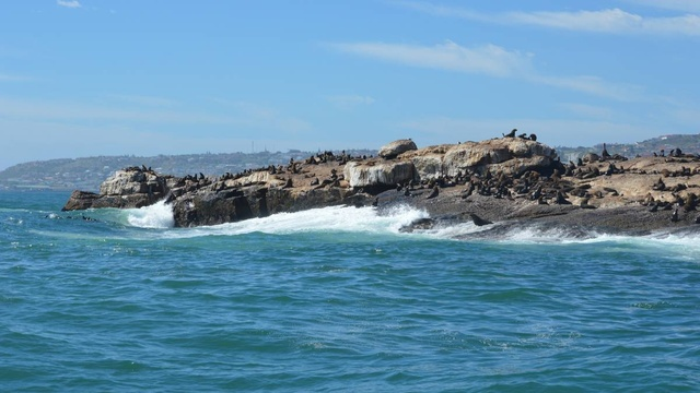 Seal island boat trips in Mossel Bay